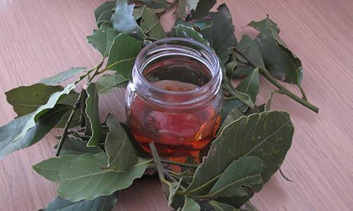 Отвар из лавровых листьев для регуляции месячных