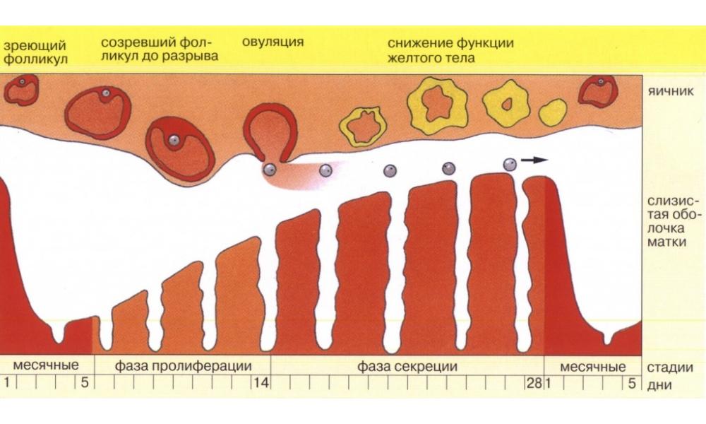 После вакуумного прерывания беременности нет крови