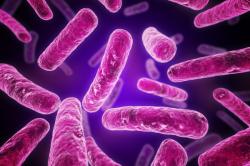 Бактерии, провоцирующие цервицит