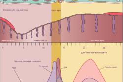 Уровень гормонов в течение менструального цикла